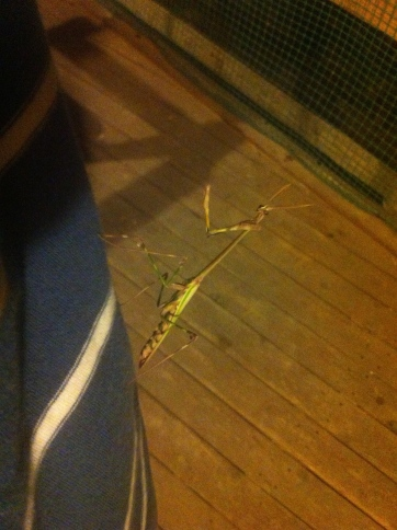A friendly stick insect
